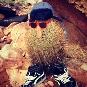 sunglassescactus